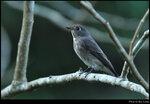 bird_20201110_04s