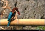 bird_20200313_01s1