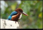 bird_20201110_05s