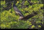 bird_20210217_02s