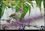 bird_20200209_09s
