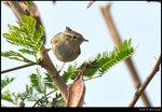 bird_20210218_04s