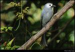 bird_20210405_04s