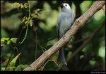 bird_20210405_05s