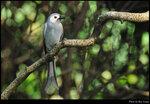 bird_20210405_06s