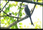 bird_20210410_05s