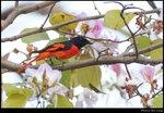bird_20210320_03s