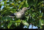 bird_20210411_11s
