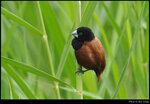 bird_20210425_01s