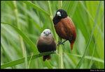 bird_20210425_02s