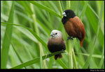 bird_20210425_05s
