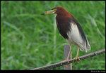 bird_20190511_03s