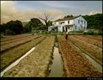 Farmland & Hosue