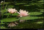 Lotus_05s