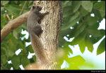 squirrel_20210320_03s