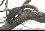 squirrel_20210327_01s