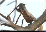 squirrel_20210327_02s