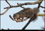 squirrel_20210327_07s