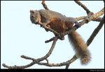 squirrel_20210327_09s