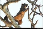 squirrel_20210327_11s