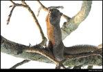 squirrel_20210327_12s