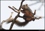 squirrel_20210327_13s