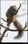 squirrel_20210327_14s