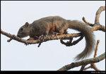 squirrel_20210327_15s