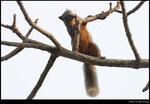 squirrel_20210327_16s