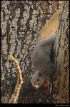 squirrel_20210327_17s