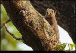 squirrel_20210327_18s
