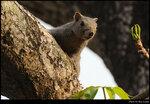 squirrel_20210327_19s