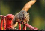 squirrel_20210327_21s
