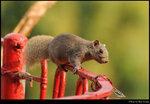 squirrel_20210327_22s