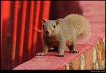 squirrel_20210327_24s