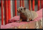 squirrel_20210327_25s