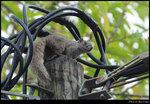 squirrel_20210411_01s