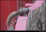 squirrel_20210411_3s