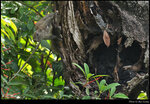 squirrel_20210418_01s