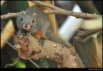 squirrel_20210423_01s