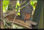 squirrel_20210423_02s