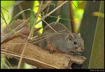 squirrel_20210423_03s