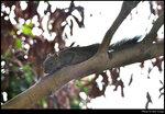 squirrel_20210502_01s
