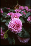 espio_mini_flower_02