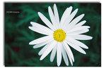 Flowershow2004 - 02
