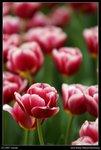 2007-03-16@HK flower show-20