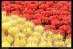 08-03-14@HK flower show sign-05