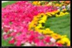 08-03-14@HK flower show sign-09