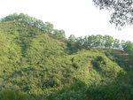 093:大牛湖(山)的青翠樹帶