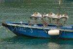 021:東龍島下角漁排(Kelvin提供)